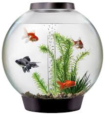 midnight birthday flowers delivery in Hyderabad
